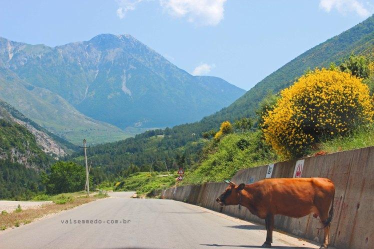 Estrada na Albânia